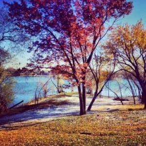 Trees, lake shore, and snow