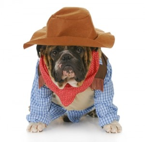 national-dress-up-your-pet-day_1122_561588_0_14035314_400